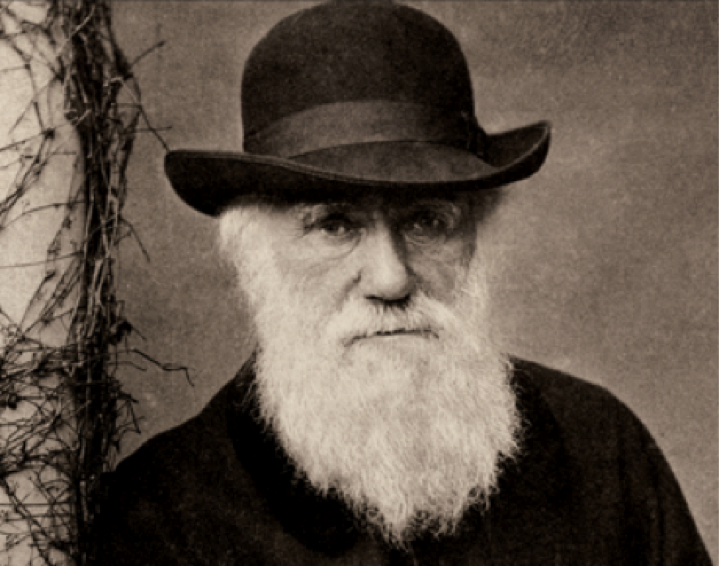 analysis of charles darwins on the Excerpts from charles darwin's voyage of the beagle adapted with permission from wwwliteratureorg preface i have stated in the preface to the first edition of this.