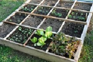"""Local Seed """"Lending Library"""" Returns for a Second Season"""