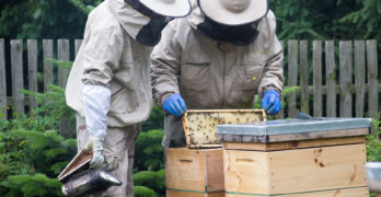 CVTC to offer in-depth beekeeping class for beginners, providing hands-on experience from March to October