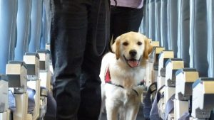 Delta Airlines' proposed policies for service and emotional support animals miss the mark